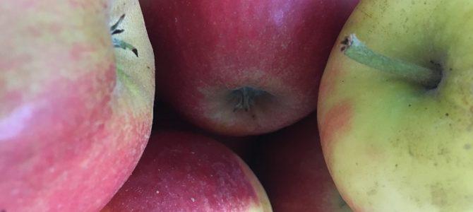 Pluktuin Vink Fruitboerderij